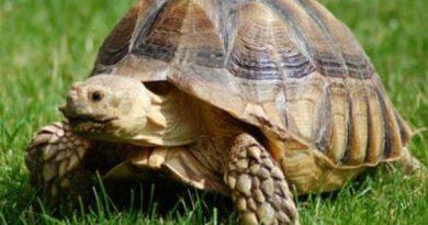 Chiêm bao mơ thấy con rùa là điềm báo tốt hay xấu?