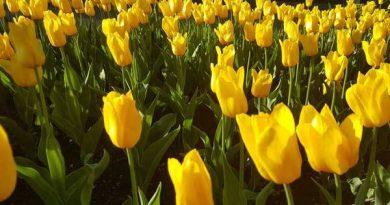 Mơ thấy màu vàng là điềm báo lành hay dữ?